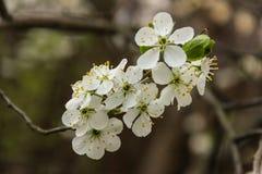 Jardín floreciente Fotografía de archivo