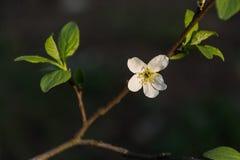 Jardín floreciente Imagen de archivo
