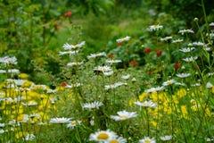 Jardín floreciente Imagenes de archivo