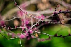 Jardín floreciente Imágenes de archivo libres de regalías