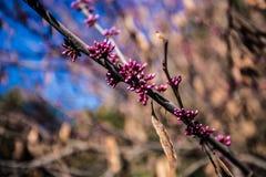 Jardín floreciente fotografía de archivo libre de regalías