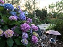 Jardín floreciente Foto de archivo