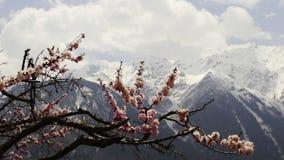 Jardín floreciente en el pueblo de Kalpa almacen de video