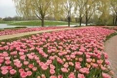 Jardín formal del tulipán Imagenes de archivo