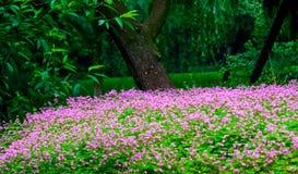 Jardín hermoso Foto de archivo libre de regalías