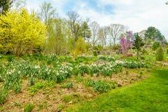 Jardín hermoso con las flores blancas imagen de archivo libre de regalías