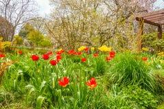 Jardín hermoso con las flores coloridas fotos de archivo libres de regalías