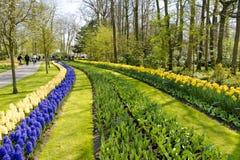 Jardín hermoso de Keukenhof Imágenes de archivo libres de regalías