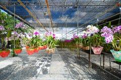 Jardín hermoso de la orquídea en Flora Park Fotografía de archivo libre de regalías