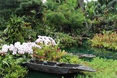 Jardín hermoso de la planta de la flora de las flores Imágenes de archivo libres de regalías