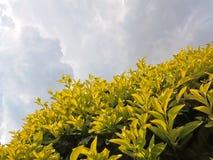 Jardín hermoso del paisaje florido del diseño Foto de archivo libre de regalías