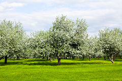 Jardín hermoso del parque en resorte Imagen de archivo libre de regalías