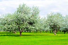 Jardín hermoso del parque en resorte Foto de archivo