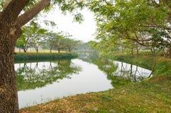 Jardín hermoso en febrero, Tailandia Fotografía de archivo libre de regalías