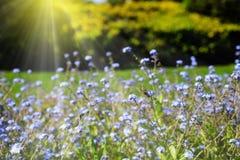 Jardín hermoso encendido por la sol Fotografía de archivo