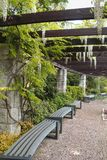 Jardín hermoso - los enrejados para las plantas que suben con las flores blancas colgantes de la glicinia Fotos de archivo