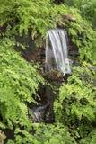 Jardín interior con diseño de la cascada Fotos de archivo libres de regalías