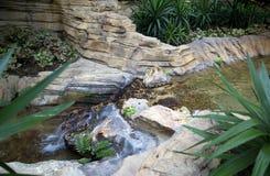 Jardín interior con la cascada Imagen de archivo