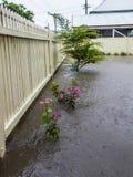 Jardín inundado Imagen de archivo