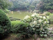 Jardín japonés Imagen de archivo