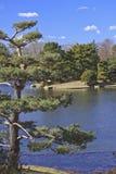 Jardín japonés fotografía de archivo libre de regalías