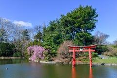Jardín japonés - jardín botánico de Brooklyn Imágenes de archivo libres de regalías