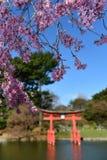 Jardín japonés - jardín botánico de Brooklyn Fotografía de archivo