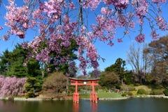 Jardín japonés - jardín botánico de Brooklyn Imagenes de archivo