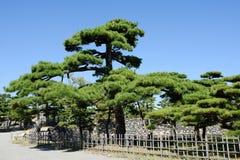 Jardín japonés con los árboles de pino Foto de archivo