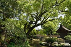 Jardín japonés con los árboles grandes y los edificios históricos Imagen de archivo libre de regalías
