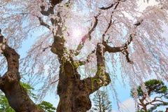 Jardín japonés conmemorativo de Fujita en Hirosaki, Japón fotos de archivo libres de regalías