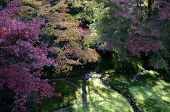 Jardín japonés del zen del otoño en Kyoto Fotografía de archivo