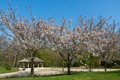 Jardín japonés, Hasselt, Bélgica foto de archivo