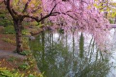 Jardín japonés romántico imagen de archivo libre de regalías