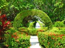 Jardín mágico Maldivas Imágenes de archivo libres de regalías