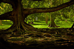 Jardín místico Fotos de archivo
