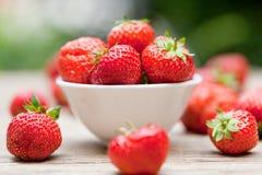Jardín macro del primer de las fresas dulces sabrosas frescas al aire libre imagen de archivo libre de regalías