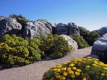 Jardín Manicured Foto de archivo libre de regalías