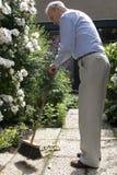 Jardín mayor de la limpieza del varón 80+ con la escoba Fotografía de archivo libre de regalías