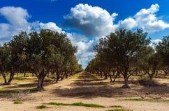 Jardín mediterráneo, primer la rama Fotos de archivo libres de regalías
