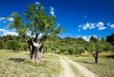 Jardín mediterráneo, primer la rama imagenes de archivo