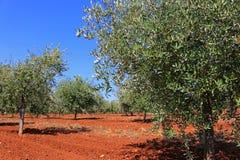 Jardín mediterráneo, primer la rama fotos de archivo