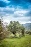 Jardín mediterráneo, primer la rama Imagen de archivo