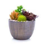 Jardín miniatura en un aislante del pote en el fondo blanco Imagen de archivo libre de regalías