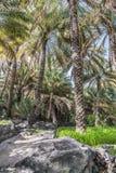 Jardín Misfah Abreyeen de la palma Imagen de archivo libre de regalías