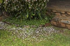 Jardín mojado de la mañana después de la noche lluviosa en Sabie Imagen de archivo