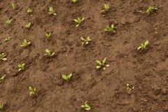 Jardín molido con la puntilla verde Fotografía de archivo libre de regalías