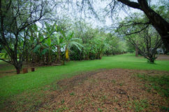 Jardín natural Imágenes de archivo libres de regalías