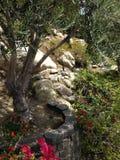 Jardín natural de las flores de los arbustos de los árboles Imagen de archivo libre de regalías