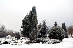 Jardín Nevado con el árbol Foto de archivo libre de regalías
